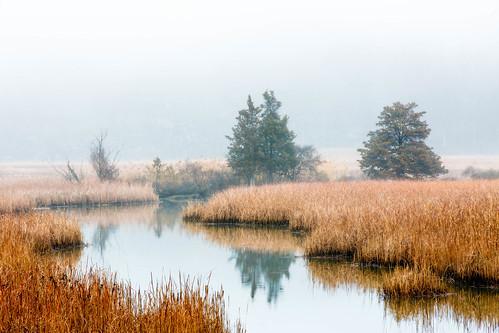 morning ionamarsh sunrise winter mist fog marsh stonypointny hightide hudsonvalley