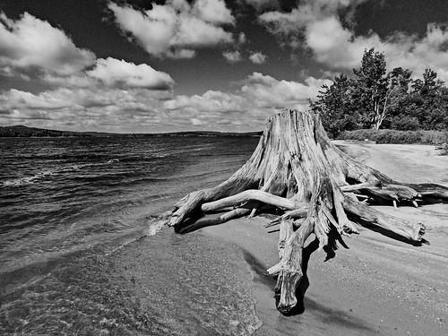 adirondacks adk adirondack paddling hiking newyorkstate stillwater lake flow reservoir beach shoreline foreverwild wilderness monochrome blackwhite