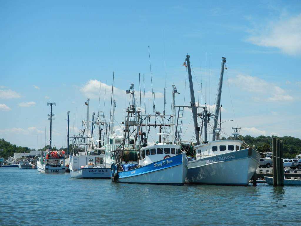 Photo of fleet of commercial fishing boats in harbor