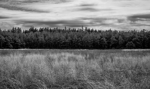 colliersmills pinebarrens newjersey nj landscape landscapephotography landscapes field pines pinetree pinetrees park forest blackandwhite blackwhite nikond3300 nikon nikonphotography nikonoutdoors adobelightroom lightroom clouds outdoor outdoors outdoorphotography getoutdoors getoutside scenery