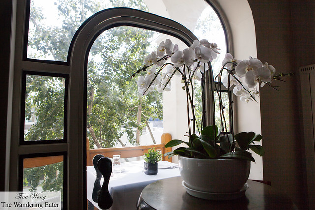 Orchids by the window