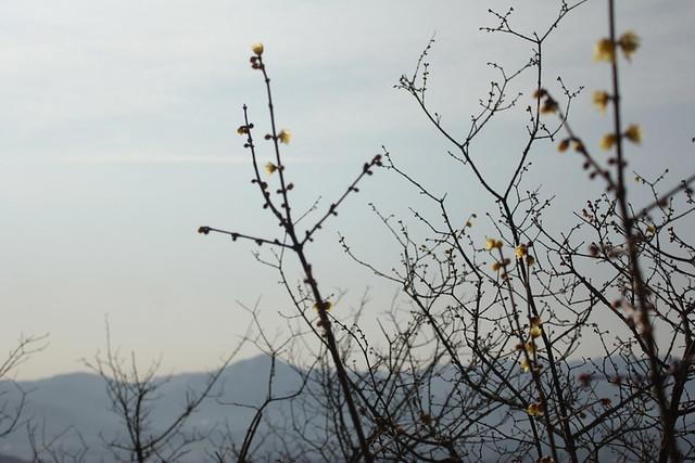 2014-02-01_00087_宝登山