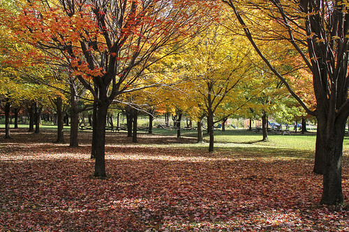 Park | by Danny VB