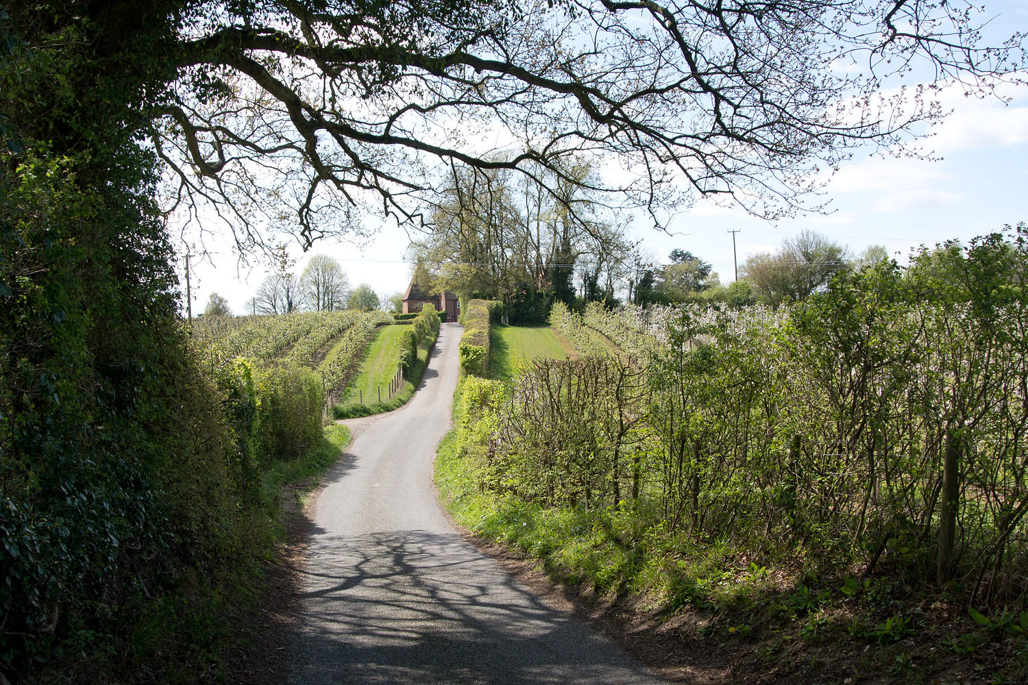 Country Lane Chilham to Canterbury