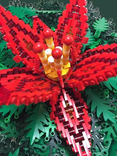 Fýrdraca Fire Flower   by gurusql