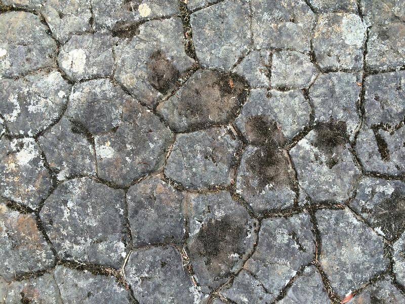 basalt-organs-texture-tasmania-guide-falls