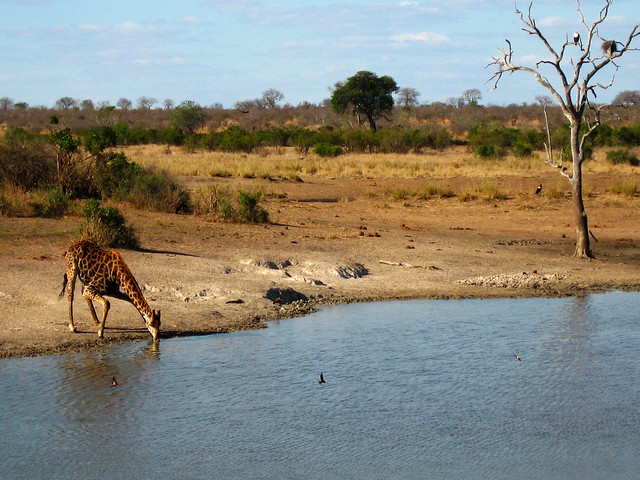 Transition to Madagascar030