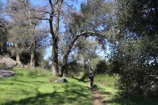 377 Tall oaks and green grass on the PCT as we hike north from Lake Morena | by _JFR_