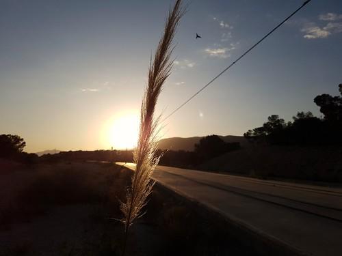 atardecer sunset naturaleza nature sol sun plant planta pajaro bird cielo sky clouds nubes vias tracks