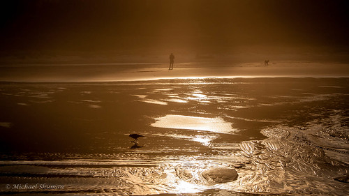 morning sunlight reflection bird beach oregon sunrise unitedstates nehalem manzanitabeach