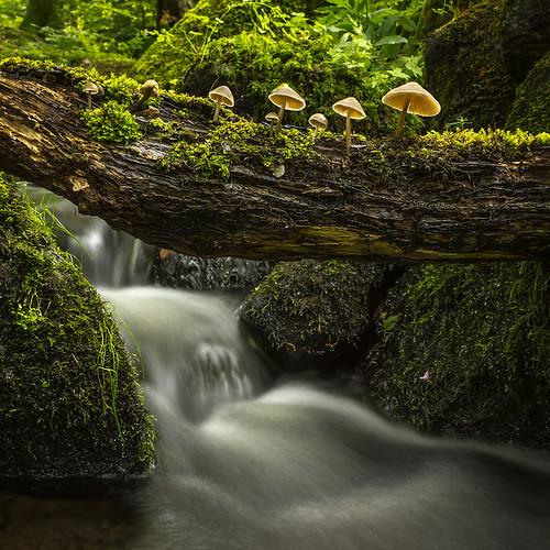 autumn mushroom water creek forest moss sweden stones fungi halland