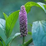 Do, 11.06.15 - 17:07 - Schöne Blume