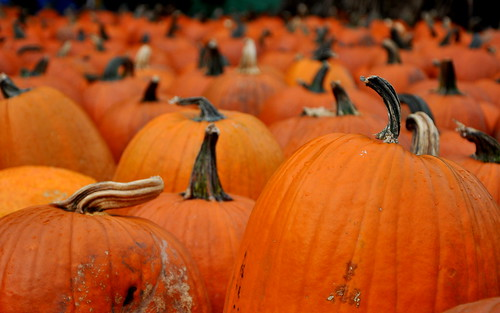 2014 80/100: Pumpkin Patch! | by peddhapati
