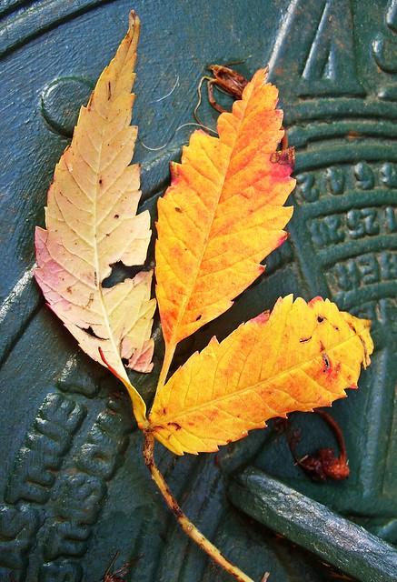 Autumnal 103