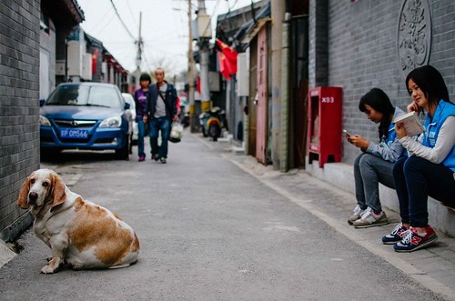 72/365: Dog in Alley | by H_H_Photography