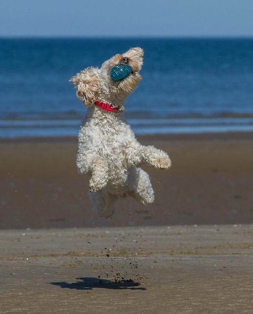 Turbo's beach antics - got it!