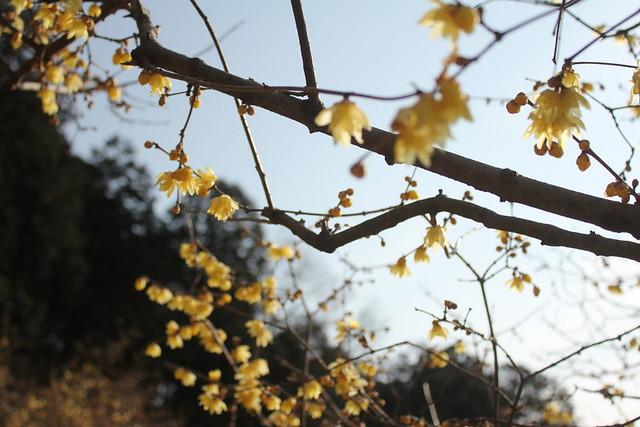 2014-02-01_00210_宝登山