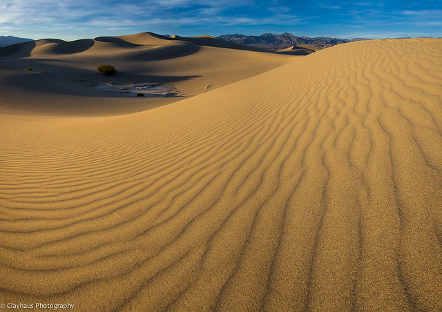 Late Afternoon on the Dunes