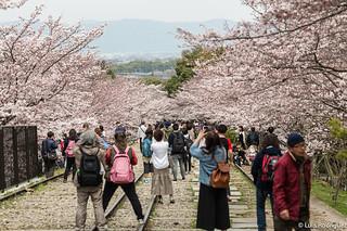 Hanami-cuesta-Keage-Kioto-26 | by luisete