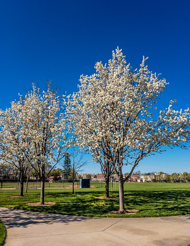luttigpark california spring flowers trees nature outdoor afternoon springflowers park ca flora recreational elkgrove unitedstates us
