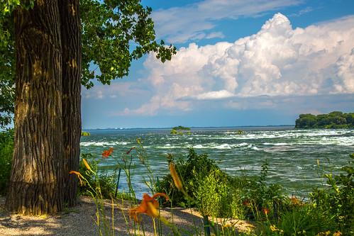 park flowers trees light clouds fleurs river landscape shadows montréal lumière rapids arbres stlawrence lasalle stlaurent nuages lachine paysage parc fleuve ombres partlycloudy rapides rapidesdelachine fleuvestlaurent ombreetlumière parcdesrapides