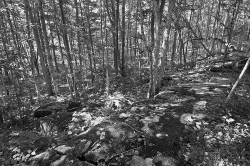 sunlight blackwhite woods path walk neighbourhood collinsbay