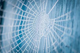 Spinnennetz mit Raureif   by 19siebenundsechzig