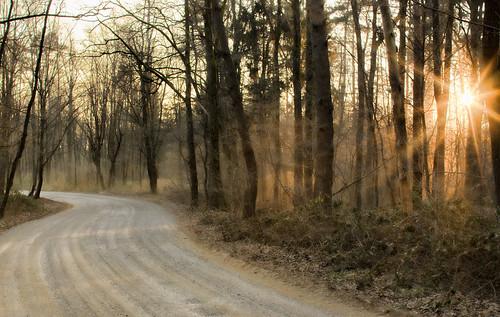 mariborarea forest sunset ontheroad nature