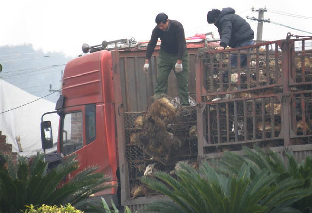 The dogs were dropped from the top of the truck still in their cages