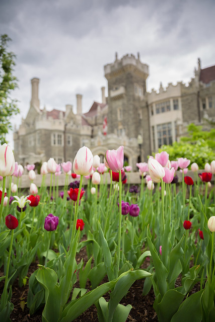 Tulips at Casa Loma