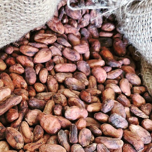 @Regrann from @cacaomarquez  -  Trnitario Guasare 2015 🍂 #cacao #cocoa #beantobar #singleorigin #fairtrade #trinitario #guasare #chocolat #chocolate #chocolatemaker #cacaovenezolano #venezuela #miami #Regrann