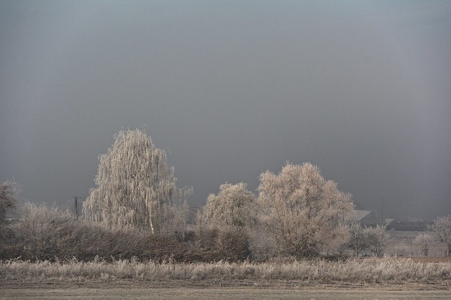 Trees in the bone-chilling cold