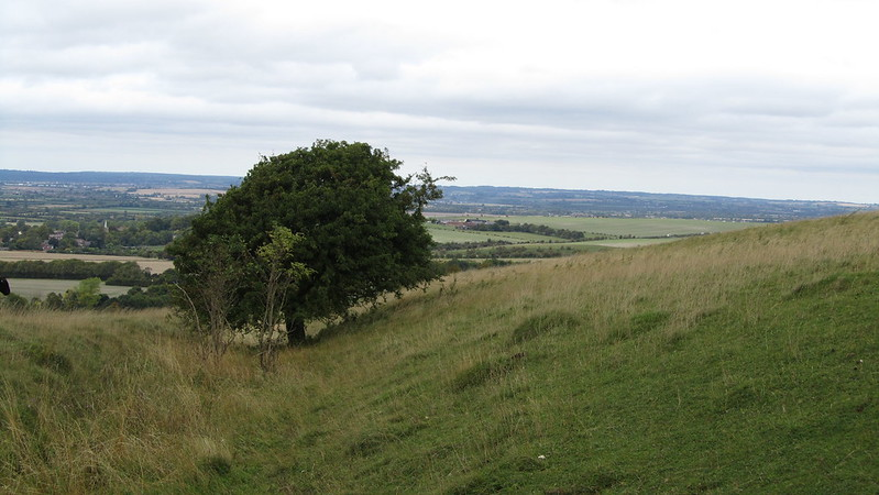 Grim's Ditch on Pitstone Hill