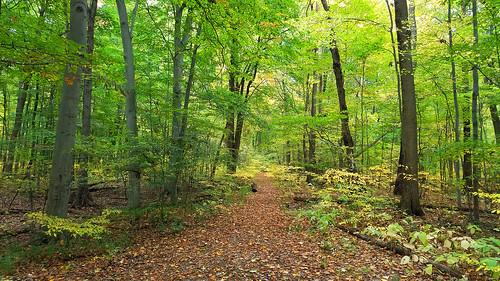 holliday park forest preserve westland michigan beech sugar maple