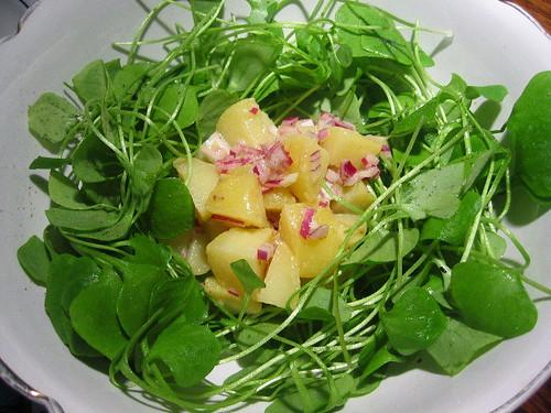 Potato, red onion and purslane salad