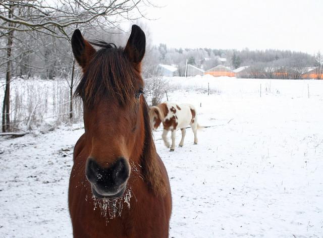 Freezing Horse?