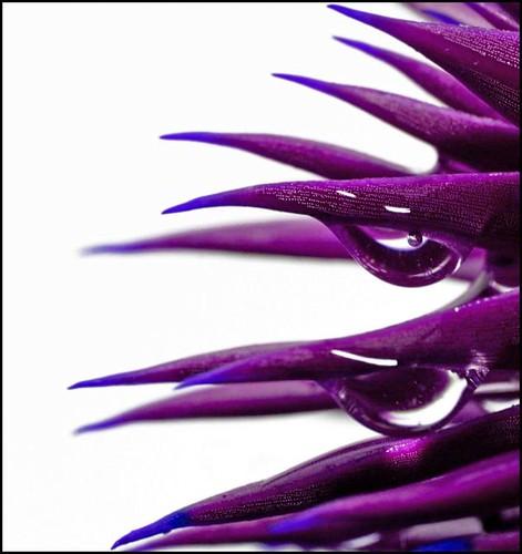 cm_purplecactus