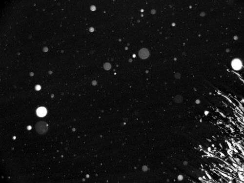 عکس از علی عامری( برف دیشب)