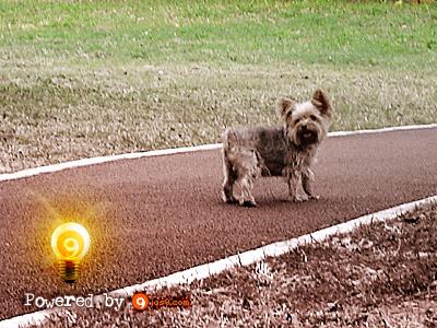brownie doggie