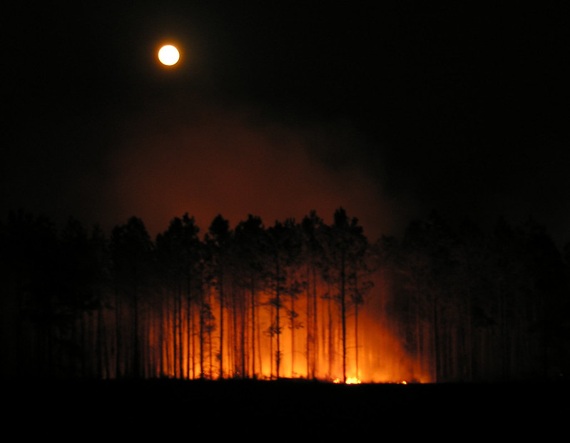 Moon Over Forest Fire