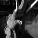 Glass-eyed Mastodon
