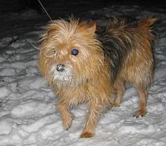 Annie the snow dog