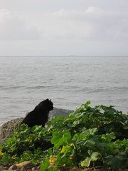 More Sea Cats