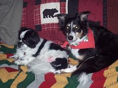 Bandit and Nicky