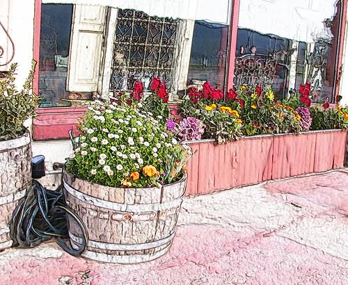 St Helena flowerpot