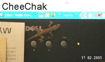 cheechak