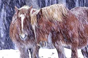 kandachime-horses2