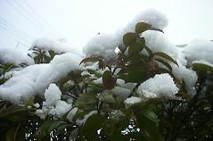 2005/02/19 Snow