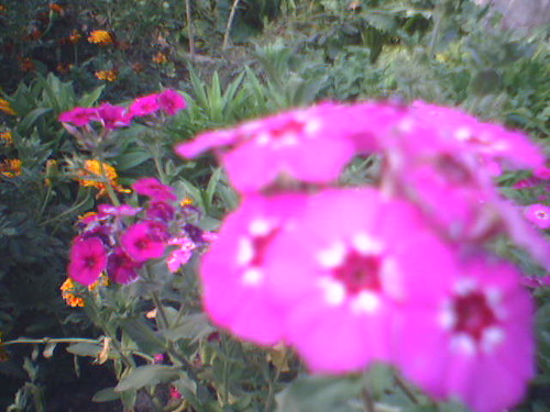 sonya's flowers