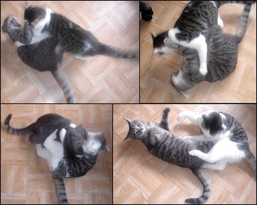 Cat-Fight-Mosaique